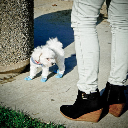 woman-and-dog-with-shoes.jpg