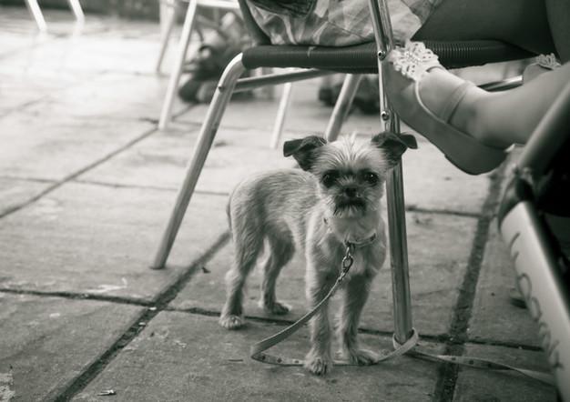 uk small dog.jpg