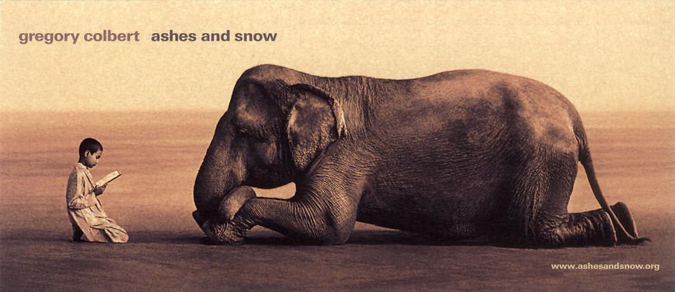 灰と雪の情報カード