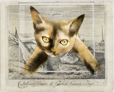 Salami-Eating Cat