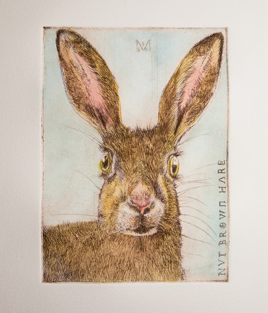 Nut Brown Hare