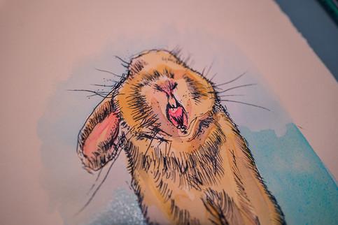 Bunny Yawning