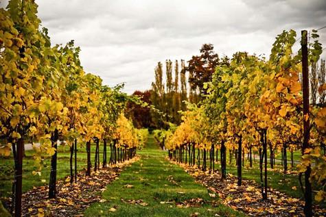 places vineyard seattle.jpg
