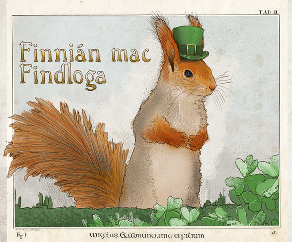 Red Irish Squirrel