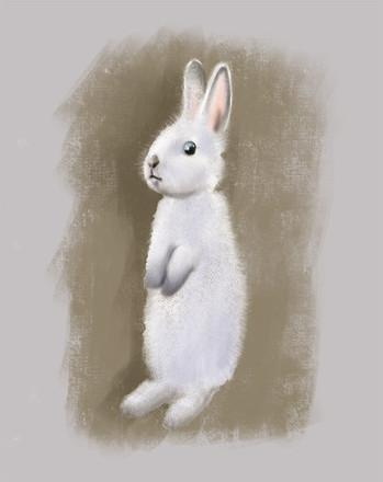 White bunny standing