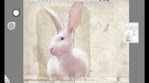 Franco The Bunny Timelapse