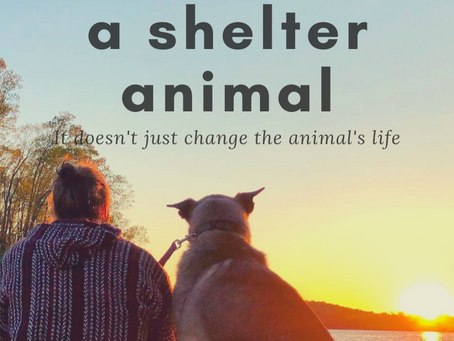 5 reasons why YOU should Foster a Shelter Animal