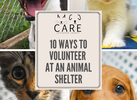 10 Ways To Volunteer at an Animal Shelter