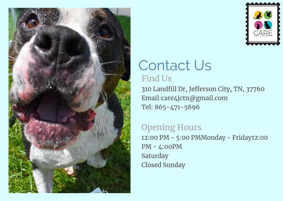 CARE Contact Information