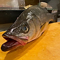 Sea Bass from Japan Suzuki スズキ