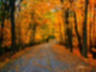 leaves, autumn, fall, road, trees, foliage