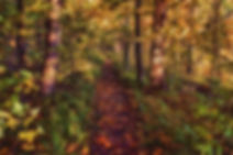 autumn, forest, path, leaves, trees