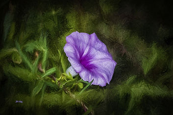 flower, purple, bloom, Florida