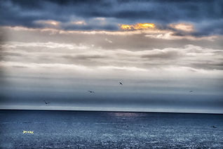 blue sky, pelicans, ocean, horizon, clouds