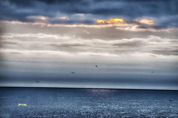 pelican, couds, sunset, ocean, horizon, blue