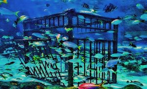 Diver cage, fish, blue water