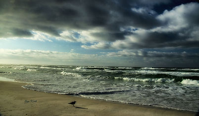 Sandpiper, beach, waves, storm, clouds, sand, Florida