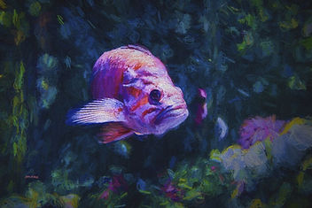 seaweed, fish, ocean, pink