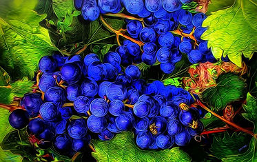 grapes, wine, blue, vineyard