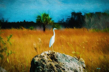 everglades, egret, tree, stone, grass