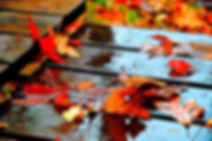 rain, picnic table, leaves, autumn, fall, colors