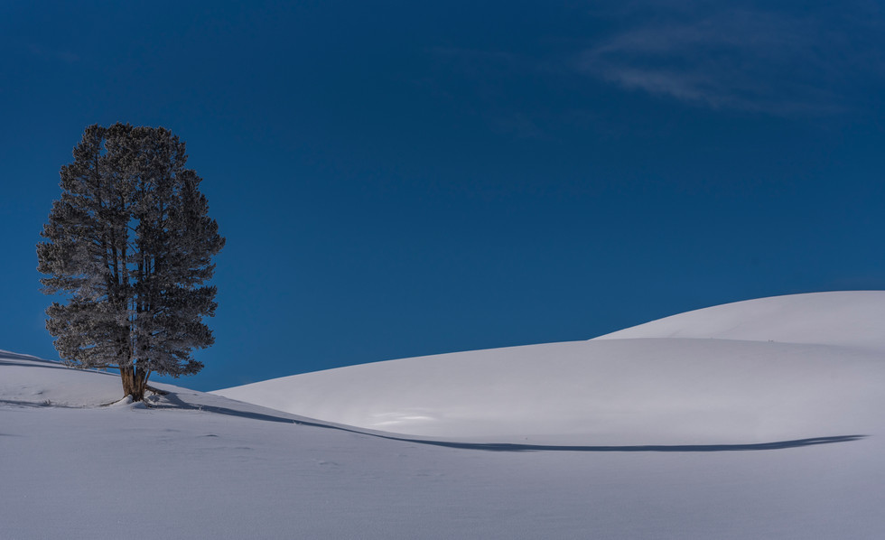Lone Tree Yellowstone National Park, MT