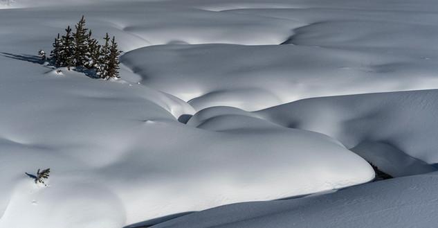 Snow field Yellowstone National Park, MT