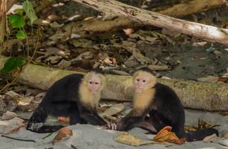 Capuchin brothers - Manuel Antonio, CR