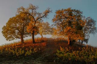 Wine Country, Sonoma, California