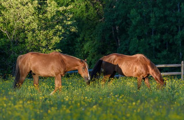 Horse in field - Mendon, VT