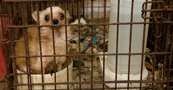 puppy-mill-goodwin-blog-m43153.jpg