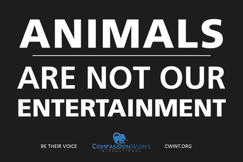 animals_arent_our_entertainment.poster
