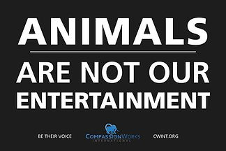 animals_arent_our_entertainment.poster.2