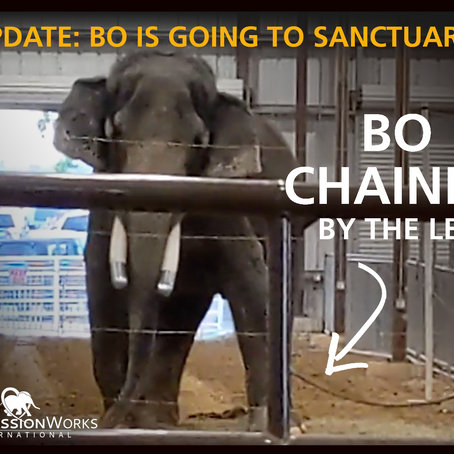 Bo is Going to Sanctuary!