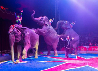 Circuses Pulled Off the Road Due to COVID-19