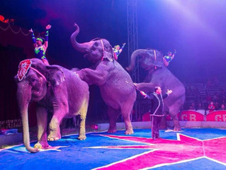 Carson & Barnes Circus is off the road!