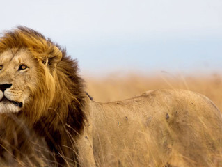 The Fight Against Trophy Hunting Continues!