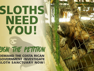 Demand the Costa Rican Government Take Action Today!