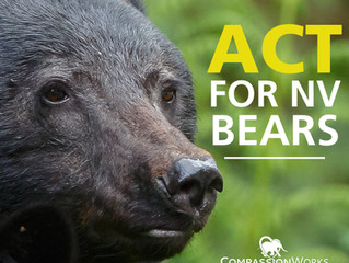 Nevada Fails Black Bears
