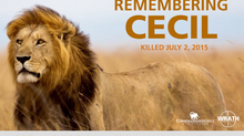 Roar For Cecil!