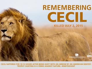 Roar For Cecil!