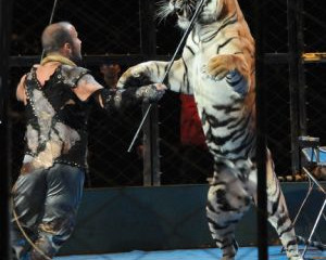 Acting Against Circuses in China