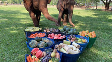 Baskets of Fruit for Thai Elephants!