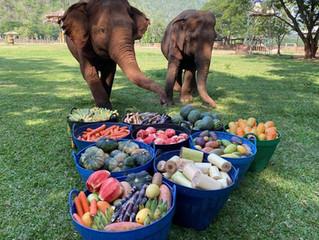 Baskets of Fruit for Thai Elephants!