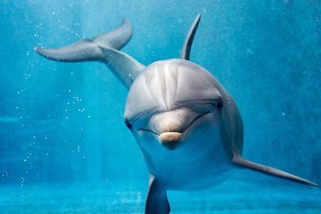 Dolphin Shutterstock.jpg