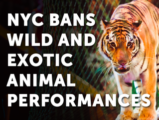 NYC Bans the Use of Exotic Animals in Circuses!