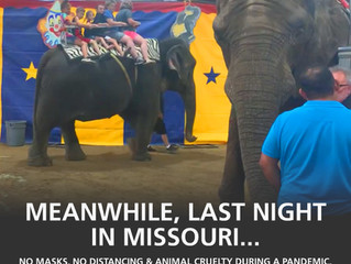 Animal Cruelty in Missouri