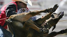 Ban the Rodeo in Los Angeles!