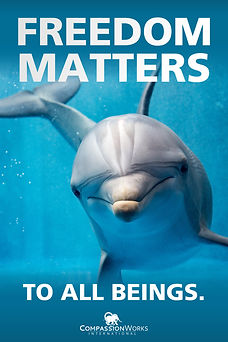 FREEDOM MATTERS DOLPHIN POSTER.jpeg
