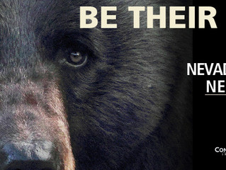 Nevada: Black Bears Need YOU!